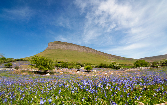 Benbulben Mountain and a field of Bluebells